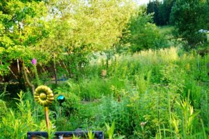 Essbare Garten- und Wildkräuter, Glück aus Grünem, Ulrike Plaichinger, Räuchern, Haunsberg, Kräuterwanderungen, Gartengestaltung
