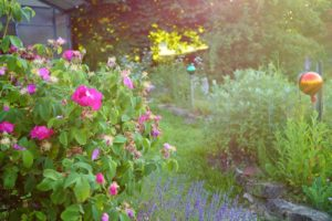 Kreative Gartengestaltung, Glück aus Grünem, Ulrike Plaichinger, Räuchern, Haunsberg, Kräuterwanderungen, Gartengestaltung