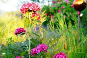 Kreativ den Garten gestalten, Glück aus Grünem, Ulrike Plaichinger, Räuchern, Haunsberg, Kräuterwanderungen, Gartengestaltung
