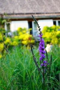 Gartengestaltung, Glück aus Grünem, Ulrike Plaichinger, Räuchern, Haunsberg, Kräuterwanderungen, Gartengestaltung