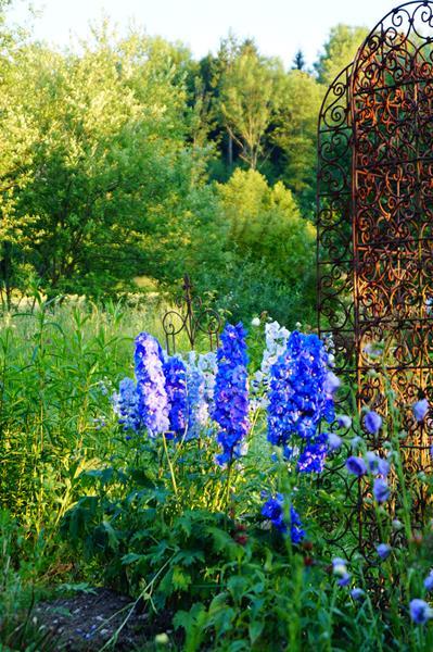 Magische Orte im Garten, Glück aus Grünem, Ulrike Plaichinger, Räuchern, Haunsberg, Kräuterwanderungen, Gartengestaltung