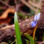 Wildblume, Glück aus Grünem, Ulrike Plaichinger, Räuchern, Haunsberg, Kräuterwanderungen, Gartengestaltung