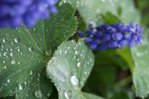 Gartengeheimnisse, Glück aus Grünem, Ulrike Plaichinger, Räuchern, Haunsberg, Kräuterwanderungen, Gartengestaltung