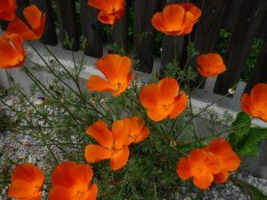 Glück aus Grünem, Ulrike Plaichinger, Räuchern, Haunsberg, Kräuterwanderungen, Gartengestaltung