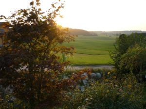 Nussdorf am Haunsberg, Glück aus Grünem, Ulrike Plaichinger, Räuchern, Haunsberg, Kräuterwanderungen, Gartengestaltung