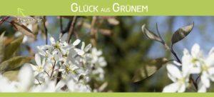 Glück aus Grünem - Ulrike Plaichinger